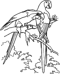 love birds attract female bird coloring pages batch coloring