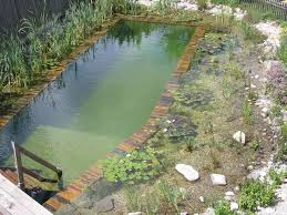 Backyard Swimming Ponds by 65 Best Natural Swimming Pools Images On Pinterest Swimming