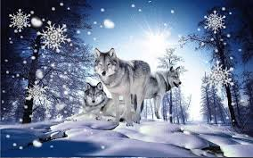 imagenes de fondo de pantalla lobos download invierno lobos fondos pantalla animadosdos apk latest
