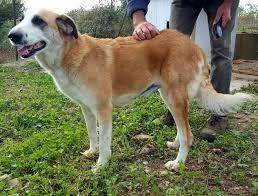 cani in cerca di casa dolcissimi cani in cerca di casa urgente annunci