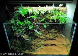 61 best aquarium images on pinterest aquariums vivarium and
