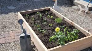 indoor vegetable garden tips starting gardens from seeds indoors