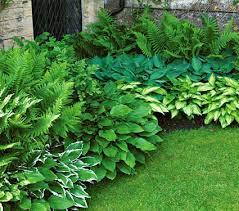 perennial shade garden plans for shade loving perennials