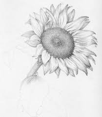 64 best drawing flowers images on pinterest drawings drawing