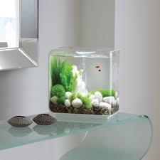 Small Tank Aquascaping Contemporary Fish Tanks Okeanos Aquascaping Custom Aquariums Fish