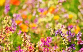 butterfly flowers butterfly flowers 6944912