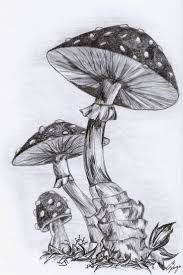 826 best art images on pinterest drawings drawing and drawing ideas