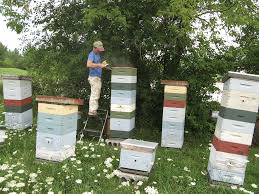 the successful beekeeper bee culture