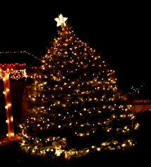 small outdoor trees with lights lights