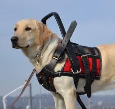 crimlaw service dog fraud