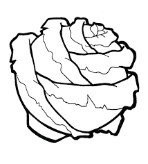 cabbage coloring pages to download and print for free