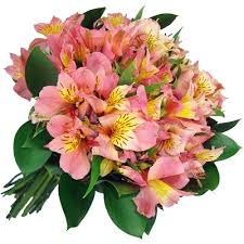 peruvian lilies radiant peruvian lilies the home of dreams