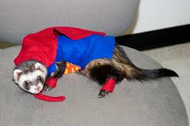 Ferret Halloween Costumes 21 Funny Animals Costumes U2013 Pleated Jeans