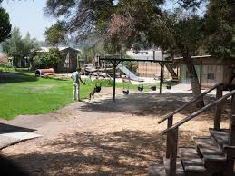 silver lake dog park in los angeles ca space shade u0026 nearby beauty
