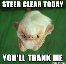Bat Meme - grumpy bat meme on imgur
