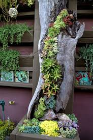 Garden Containers For Sale Decoration Succulent Containers For Sale Patio Pots Ideas