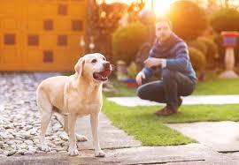 dog friendly backyard ideas pets training and boarding