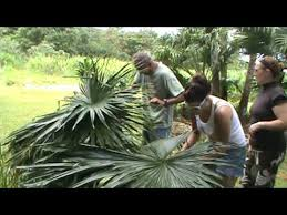 How To Build A Tiki Hut Roof Preparing The Palm Leaves For The Thatching The Hale Roof Youtube