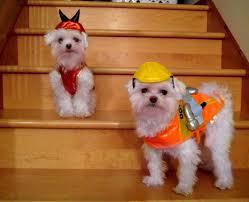 Love Jenny Xoxo Charlie And Sawyer U0027s Halloween Costumes