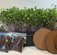 home garden kit indoor planter with spicy microgreen mix red and