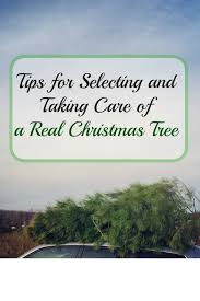 for selecting and taking care of a real christmas tree