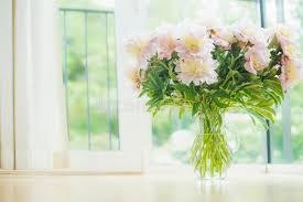Peonies Bouquet Big Beautiful Pale Pink Peonies Bouquet In Glass Vase Over Window