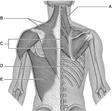 Human Anatomy Flashcards 97 Best Anatomy U0026 Physiology Images On Pinterest Study Guides