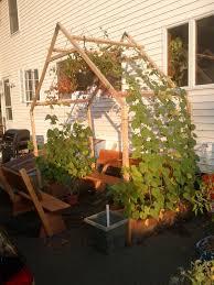 building a grape arbor alli u0027s garden