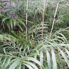 Unusual Tropical Plants - tropical plants you can use to create a uk hardy exotic paradise
