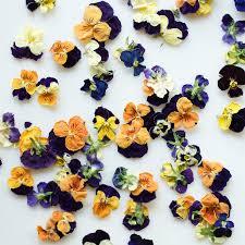 Edible Flowers Edible Flowers Vylette