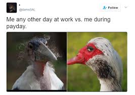 Duck Meme - 34 sly duck memes too smooth for your own good