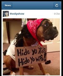 dog halloween costumes images hide yo wife hide yo kids pet halloween costumes diy hello fall