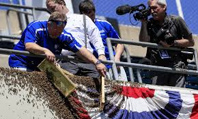 the royals removed thousands of bees after an swarm took