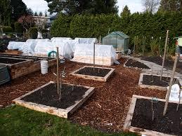 Backyard Orchard Culture A MiniOrchard In The Making Northwest - Backyard orchard design
