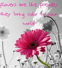 Flowers And Friends - frriendly flower photo by alyssakay622 626 photobucket