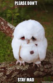 Dont Be Mad Meme - please don t stay mad sad owl make a meme