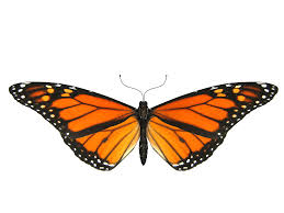 butterfly small wings transparent png stickpng