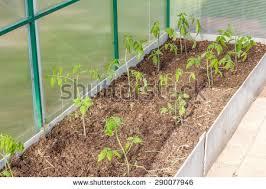 Inside Vegetable Garden by Lush Green Plot Vegetable Stock Images Royalty Free Images