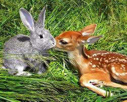 bambi thumper 16 animal friendships mnn