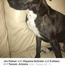 Arizona Memes - jen palmer with chyanne schreier and 5 others in 9 tucson arizona