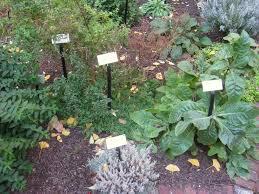 dixieline in the garden