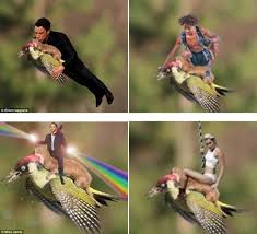 Weasel Meme - photo of weasel riding woodpecker is real these flying weaselpecker