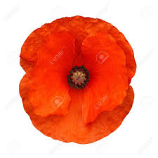 remembrance images u0026 stock pictures royalty free remembrance