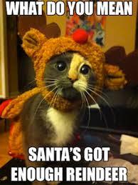 Thanksgiving Cat Meme - hipster kitty 25 hilarious christmas memes complex