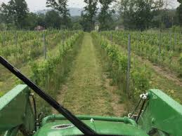 The Trellis And The Vine You Wanted A Vineyard The Occasional Musings Of A Wine