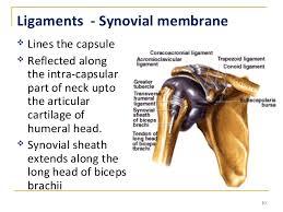 Tendon Synovial Sheath Shoulder Joint Mbbs 3 9 2015 Dr Vvs