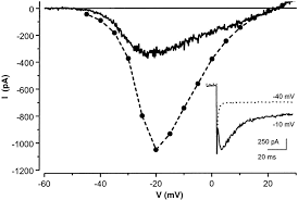 normalized current voltage i v relationships of acutely isolated