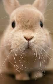 rabbit rabbit 1888 best rabbit rabbit images on bunny bunny
