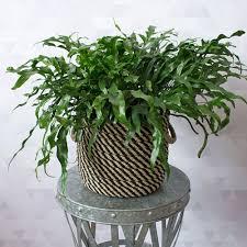 Fragrant Tropical Plants Tropical Plants White Flower Farm