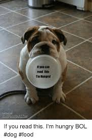 Dog Food Meme - if you can read this i m hungry if you read this i m hungry bol